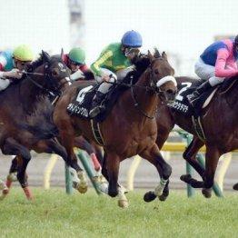 東京の日曜特別3鞍は上々のハイレベルだった