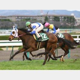 10年は6枠の馬が勝ち、8枠のアパパネが②着だった
