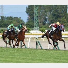 「新潟日報賞」レースの様子