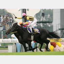 06年は神戸新聞杯③着のソングオブウインドが8番人気で勝利
