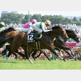 ゼウスバローズは14番手から全馬ゴボウ抜き