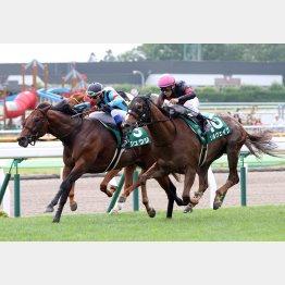 昨年は12番人気の牝馬ソルヴェイグが勝利