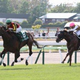 恒例企画 武田記者が夏競馬の攻略法を伝授