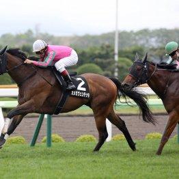 函館最終週 連闘馬、4戦目を疑い、他場からの転戦馬を買え