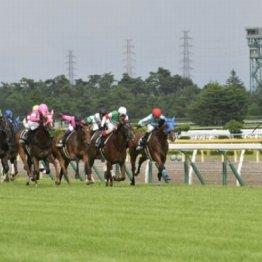 新潟土、日曜メーンは④⑤着馬の次走に注目