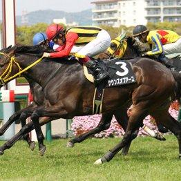 【札幌記念】本命三分 勝つのはGⅠ善戦馬かサクラAか