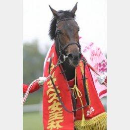 昨年の勝ち馬クイーンズリングは今年も参戦