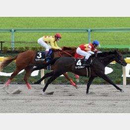 ダークリパルサーはオキザリス賞を差し切り勝ち