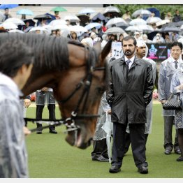 モハメド殿下は馬を見る目も鋭い