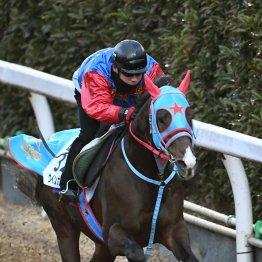 【土曜京都11R・京都金杯】開幕馬場を味方にできるウインガニオン
