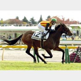 5馬身差圧勝のテトラドラクマ