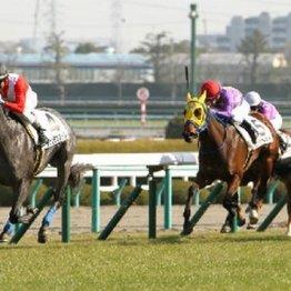 【月曜京都11R・シンザン記念】ファストアプローチ、カシアスは割り引く