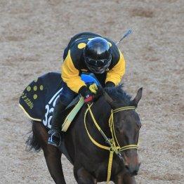 【月曜東京11R・クイーンC】M・デムーロを確保したツヅミモン