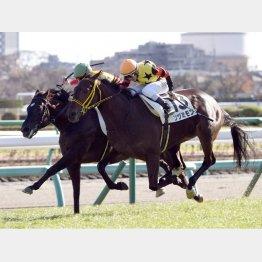 新馬戦を快勝したツヅミモン