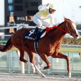 フェブラリーS JRAのGIを買った地方所属馬はメイセイオペラただ1頭