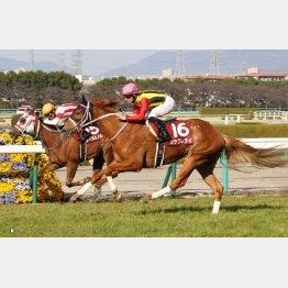 去年の桜花賞馬はここで②着のレーヌミノル