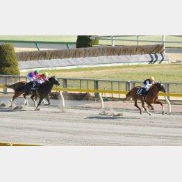 前走ヒヤシンスSも後続に2馬身半差の圧勝