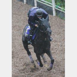 攻め馬はいい雰囲気