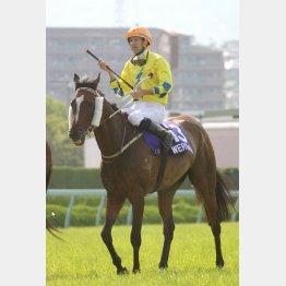 香港年度代表馬の実力を見せた