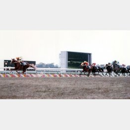 函館記念の次走、マイルチャンピオンSでも4馬身差の圧勝(サッカーボーイ、1988年)