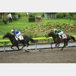 エヴィエイションは既走馬を相手にデビュー勝ち