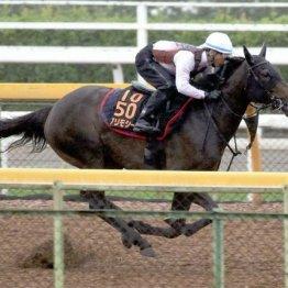 【日曜新潟11R・関屋記念】牝馬◎で一致したが・・・