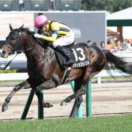 【日曜札幌11R・札幌記念】函館記念は2人の◎で馬単万馬券