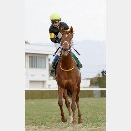 昨年の京都牝馬S以来の勝利を目指すレッツゴードンキ