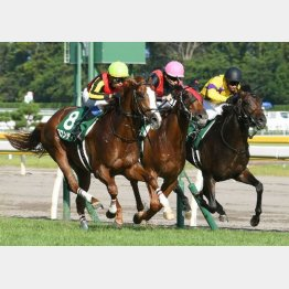 昨年は中京で新馬勝ちのフロンティアが連勝を決めた