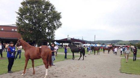 地方競馬の馬主会にもこんなにたくさんの特典があるのです