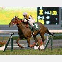 一昨年の京阪杯は4馬身差V