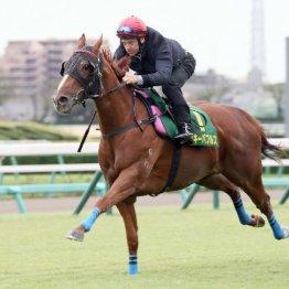 【スプリンターズS】関東のGⅠウイナー2騎はバッサリ