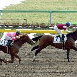【日曜東京11R・毎日王冠】NHKマイルC馬2頭の割引材料はこれ