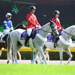 「係長」の役職馬もいる誘導馬