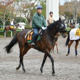 【日曜東京5R】ルヴォルグ「ダービーは応援に行きます」