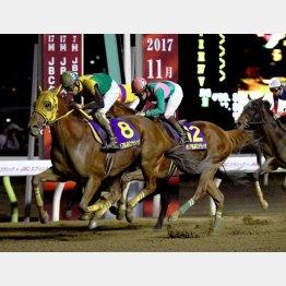 昨年の勝ち馬サウンドトゥルーも出走