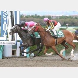 シリウスSは過去の勝ち馬と比較してもハイレート