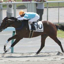 前田さんと北島先生の馬が激突するJBCスプリント