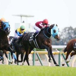 土日の東京競馬は2重賞をはじめスローのレースが続出