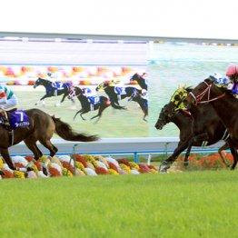 吉田豊のお手馬でGⅠを勝った時は複雑な気持ちだったな
