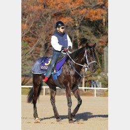 新種牡馬ベルシャザールの産駒