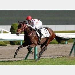 坂井の帰国後の初勝利はこの馬だった