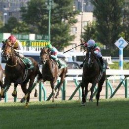 【月曜中山11R・京成杯】東京で新馬を勝った1戦1勝馬は・・・