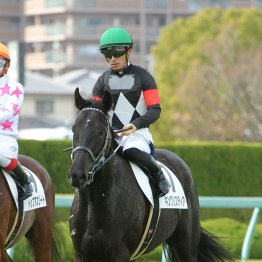 【土曜京都10R・若駒S】乗れてる鞍上でキングリスティア巻き返す