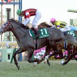 【日曜京都11R・京都記念】中間は馬なりばかりのマカヒキは状態に疑問符