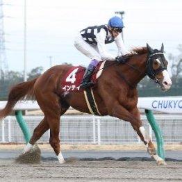【日曜東京11R・フェブラリーS】〝362分の1〟を引く強運も インティがダートの頂点へ