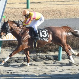 【土曜阪神11R・仁川S】キクノルアの前走V内容はオープンでも通用