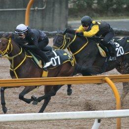 【日曜中山11R・弥生賞】皐月賞②着馬の全弟ヴァンケドミンゴの大駆け