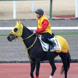 【土曜中山11R・中山牝馬S】差し馬向きの展開でデンコウアンジュ出番