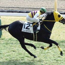 【日曜中山11R・スプリングS】まさかの人気薄関東馬で◎が一致